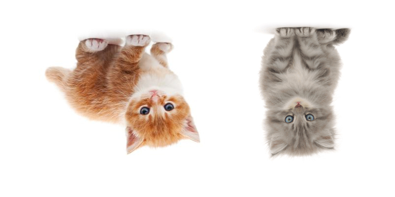 upside down cats: part 1