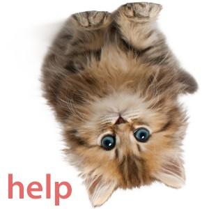 cat needs help